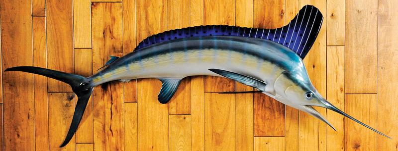 Striped marlin mount, taken in Ocean City, Marylan