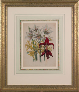 J.W. Loudon, two hand-colored lithographs of flowe