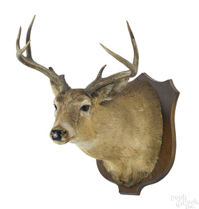 Large taxidermy whitetail deer head mount, nine po