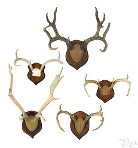 Five sets of deer antlers.
