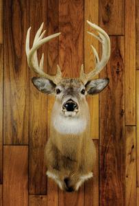 Fourteen point Pennsylvania whitetail.