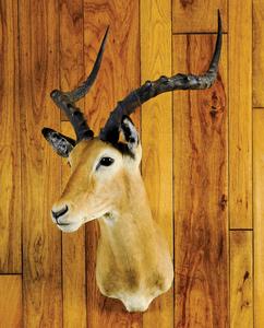 Impala mount, ca. 1970's, taken in Kenya.
