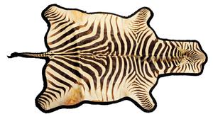 Zebra rug, ca. 1970's, taken from Kenya.