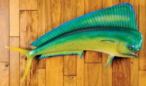 Dolphin fish mount, taken from Baja California.