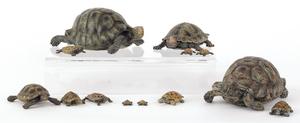 Fourteen Austrian cold painted bronze turtles, mid