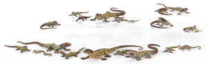 Twenty-one Austrian cold painted bronze lizards, m