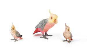 Three cockatiels, mid 20th c., two - 4