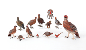 Thirteen Austrian cold painted bronze game birds,i