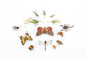 Fourteen Austrian cold painted bronze insects, mid