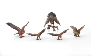 Five Austrian cold painted bronze hawks, mid 20th.