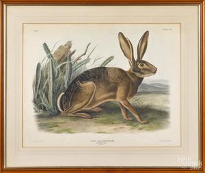 John James Audubon color lithograph