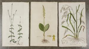 Six botanical engravings