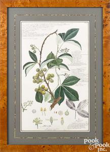 Three botanical watercolors