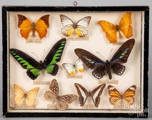 Framed group of moth specimens