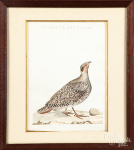 Four color bird engravings