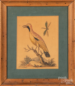 George Edwards bird engraving, etc.