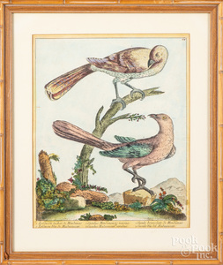 Early hand colored bird engraving