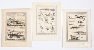 Three Bellin 1746 animal reptile and bug prints