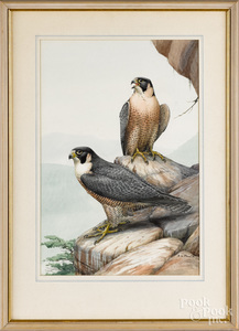 Earl Lincoln Poole, watercolor of two raptors