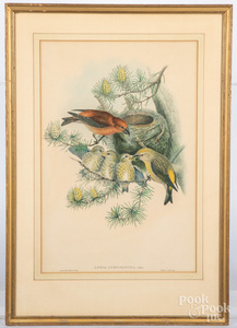 Gould & Richter color lithograph