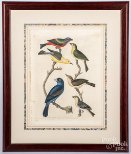 Six Alexander Wilson color bird engravings
