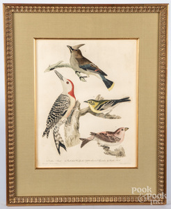 Six Alexander Wilson color bird engravings