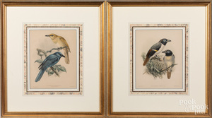 Eight bird and butterfly prints. Provenance: The