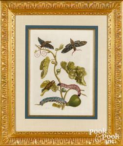 Maria Sibylla Merian plate 33, fig tree branch